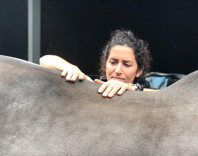 consultation ostéopathie sur un cheval