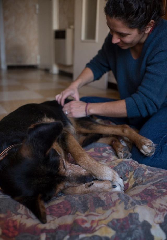 ostéopathe chien